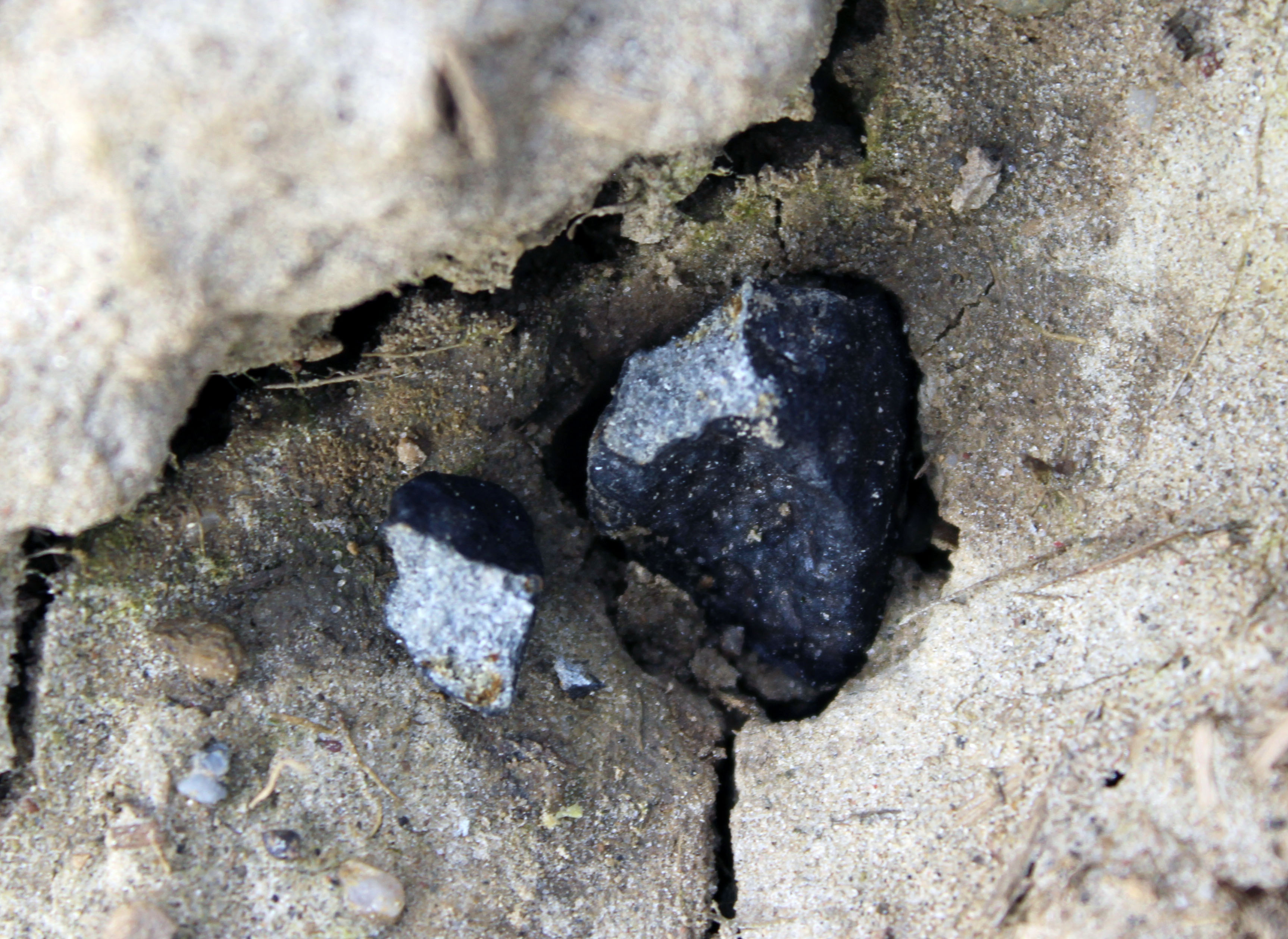 Third Ering meteorite (7.22 g + 0.45 g) in situ (Photo: R. Sporn)